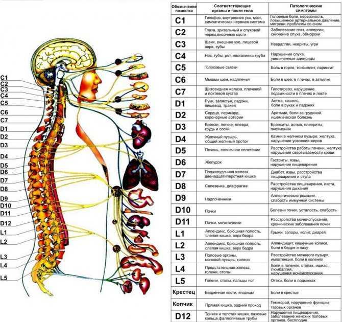 Психосоматика кишечника: причины синдрома раздраженного кишечника и рака, кишечных расстройств, болей и газов