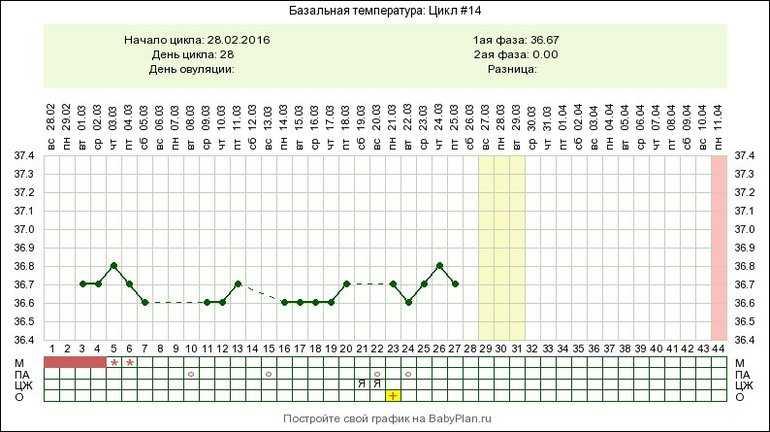 Какая базальная температура должна быть в период овуляции, как правильно измерять и вести график бт?