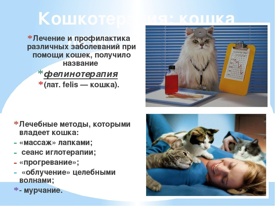 мейн кун проблемы со здоровьем - zoomanji.ru