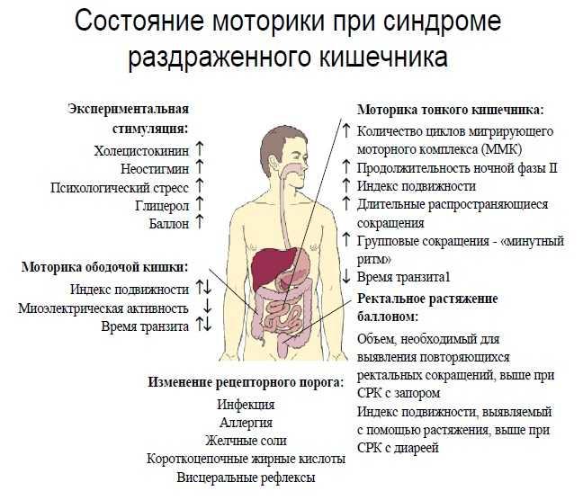 Синдром раздраженного кишечника: симптомы, причины, лечение и профилактика