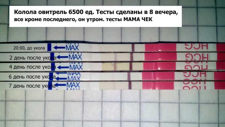 Укол хгч: при стимуляции овуляции, инструкция по применению, инъекции 5000 ед (10000), как колоть для зачатия после, гонадотропин хорионический, беременности на ранних сроках эко, перед пункцией, куда