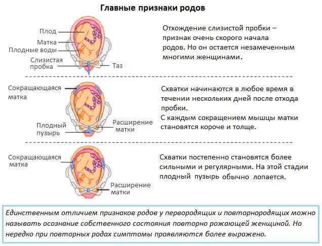 Как ускорить роды: несколько безопасных способов ускорить процесс / mama66.ru