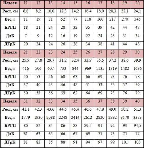 Узи на 20 неделе беременности (30 фото): размер плода, показатели и норма, параметры – таблица, определение пола, расшифровка