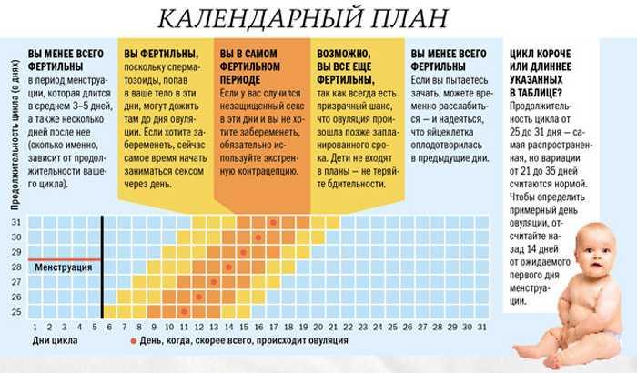 Сколько длится овуляция - у женщин, по времени, сколько дней, часов, как долго, при 28-дневном цикле, когда начинается, после слизи, чтобы забеременеть