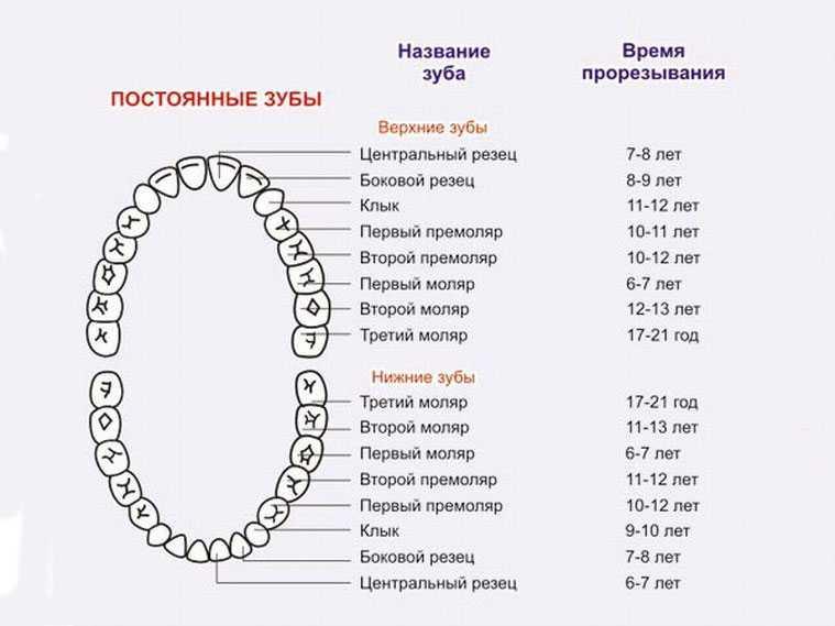 Сколько должно быть зубов у ребенка в 3 года: количество и сроки прорезывания