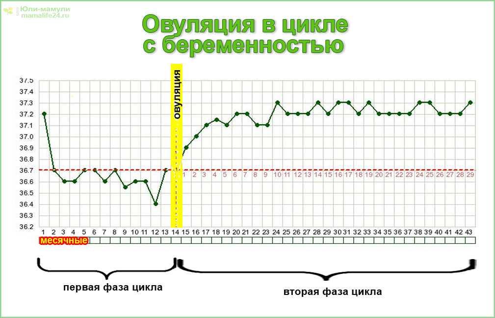 Базальная температура при овуляции | как измерить базальную температуру?