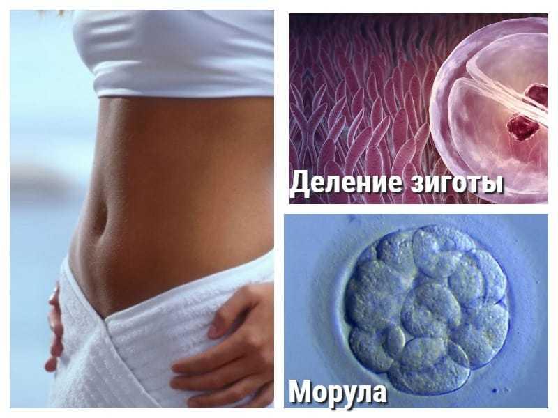 3 неделя беременности: что происходит, фото плода, признаки, симптомы, узи