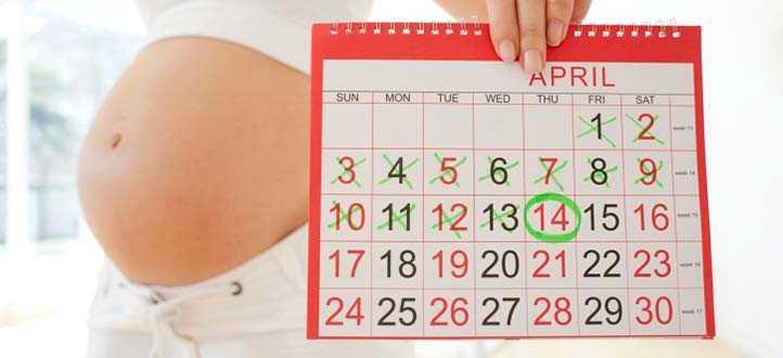 Сколько длится беременность у человека дней и недель